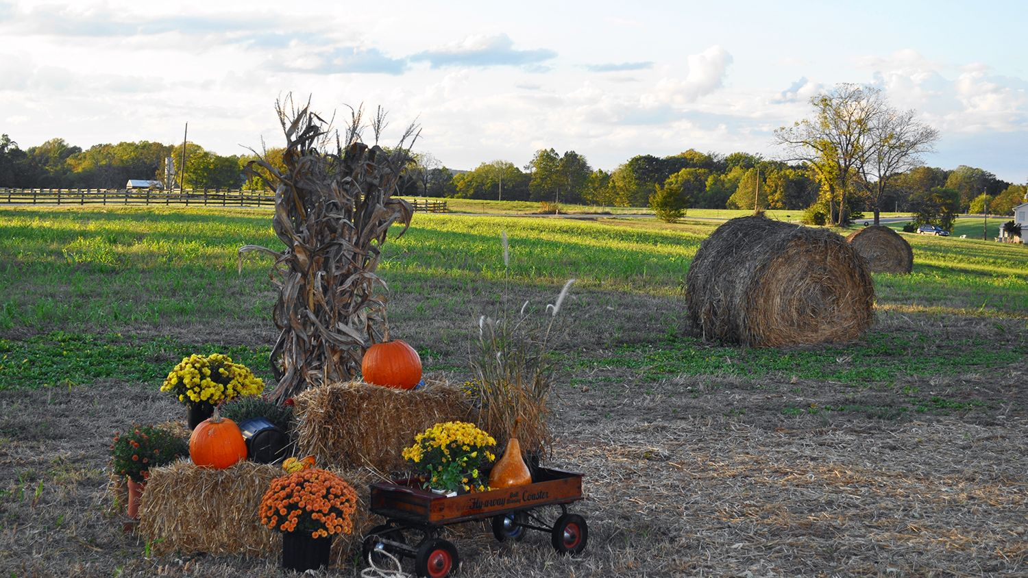 Hay Bales with pumpkins and mums - Fall